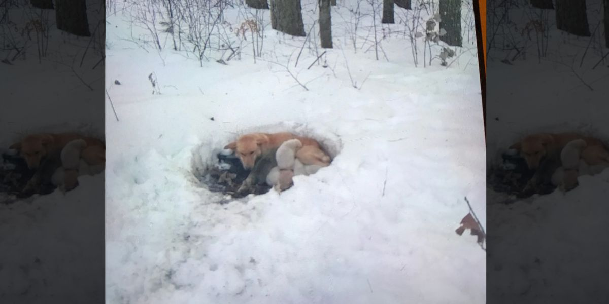Dog, puppies doing well after found alone in snowdrift
