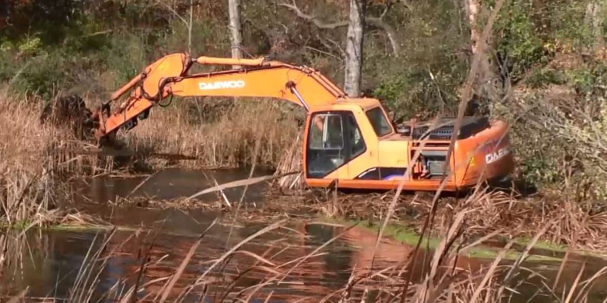 DNR removes bog near Waterville