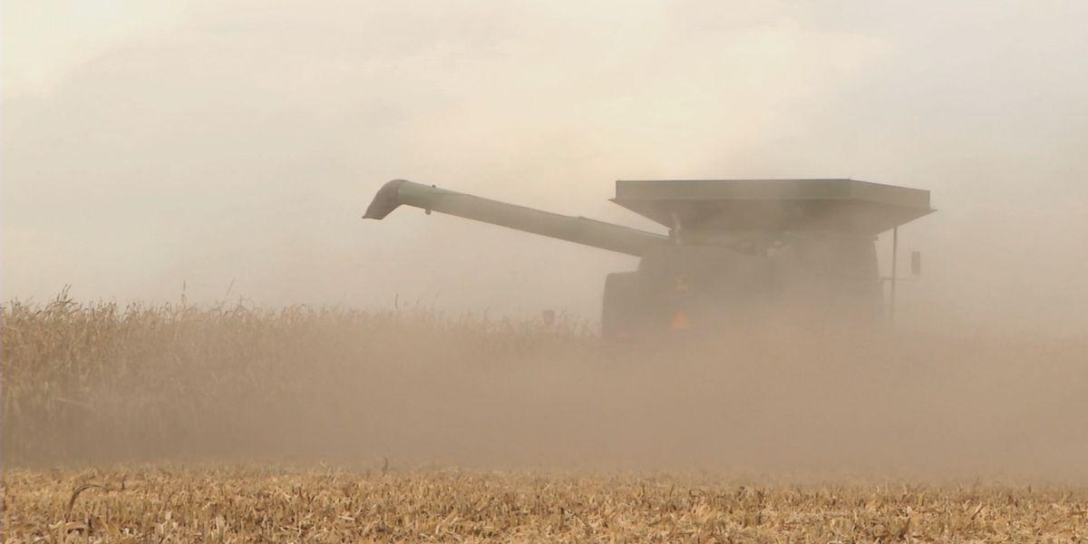 Ethanol economics: industry experiences volatility