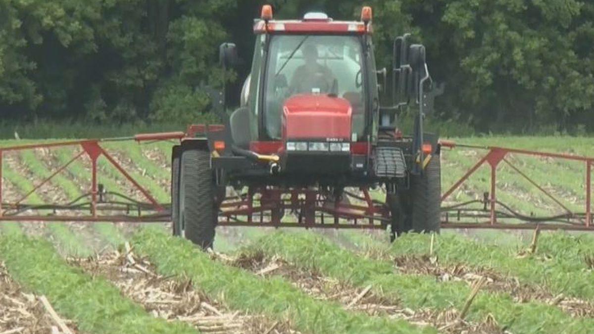 USDA predicts big jump in corn, soybean acreage for Minnesota