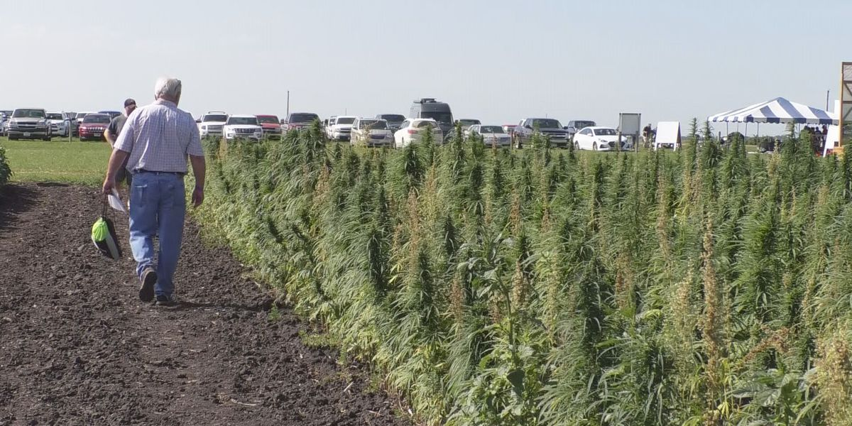 USDA approves Minnesota's hemp production plan