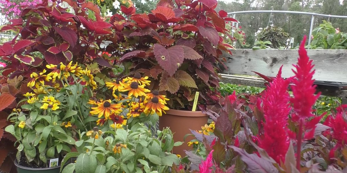 Image result for Gardening tips as fall approaches