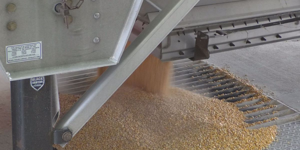 Southern Minnesota agriculture businesses watch trade talks
