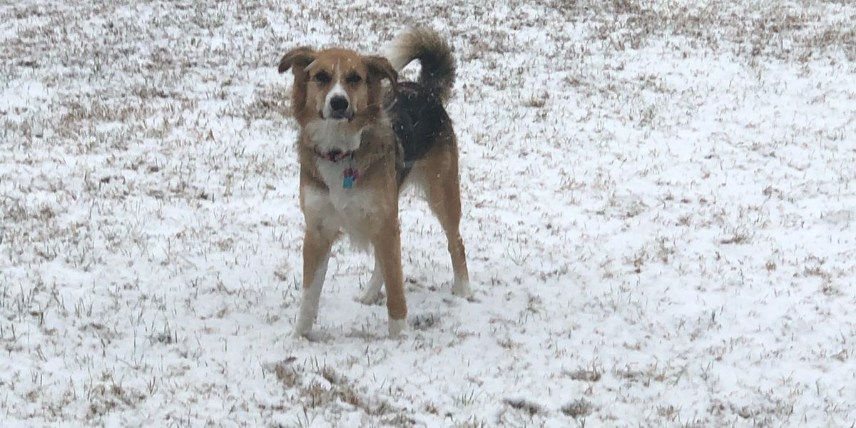WATCH: Dog in Texas experiences first snowfall!