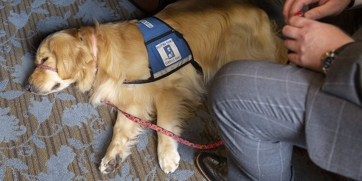 Ramsey County to use dog to ease stress of courthouse