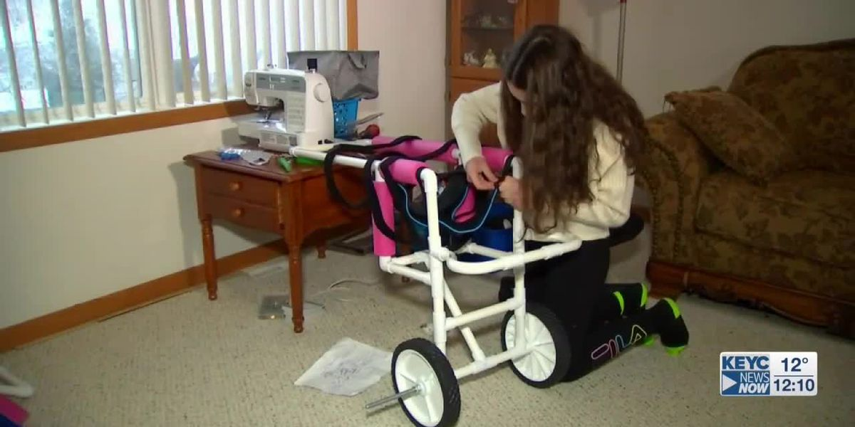 Teen makes special wheelchairs for dogs