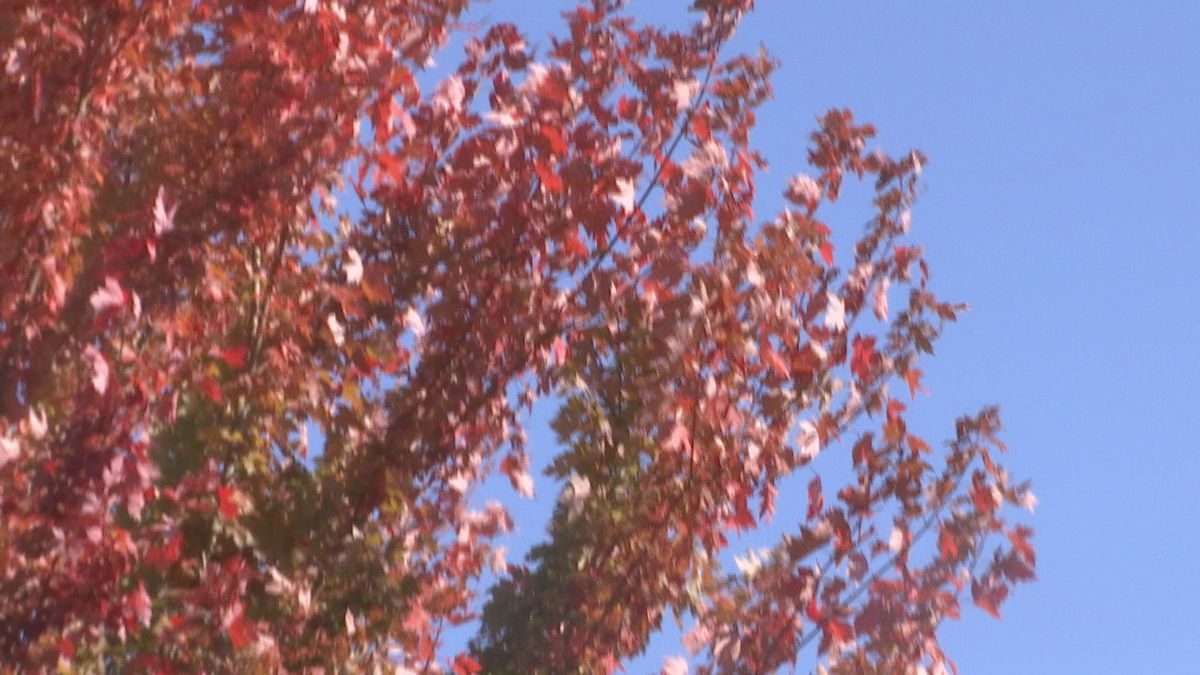 Breakdown of fall foliage and changing leaf color