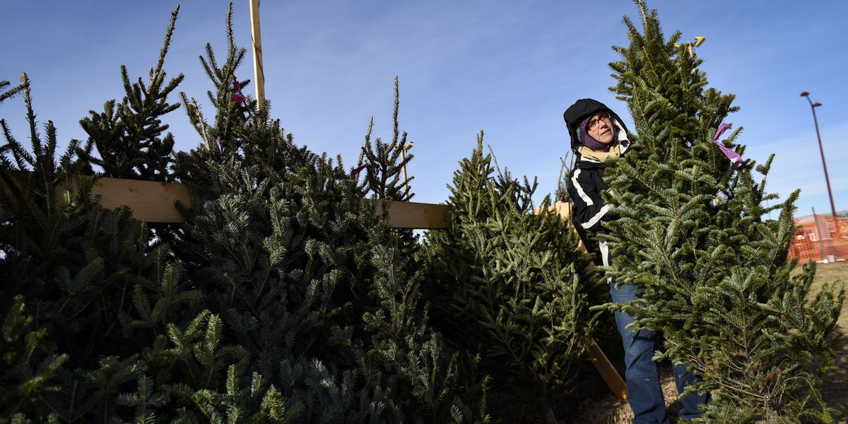 Christmas trees sold fast this year, but there's still a few left up for grabs