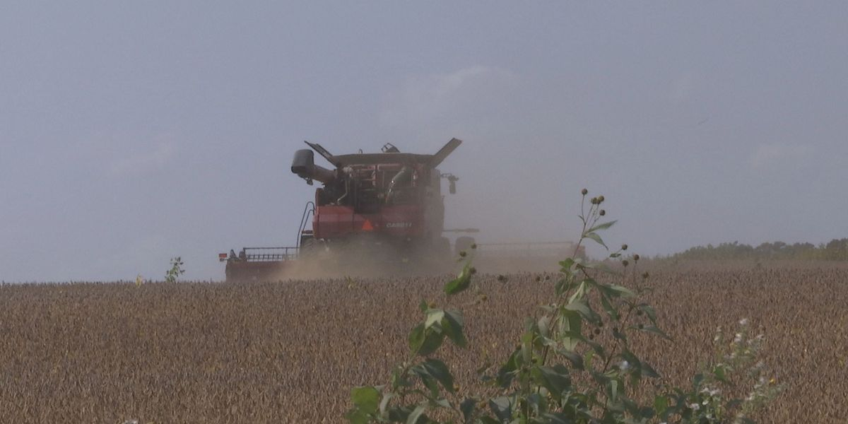 Above average yields and quality crop reported during harvest 2020