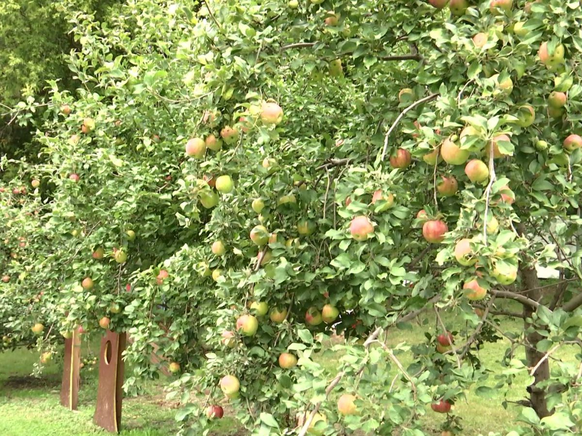Hometown Business Connection: Center Creek Orchard