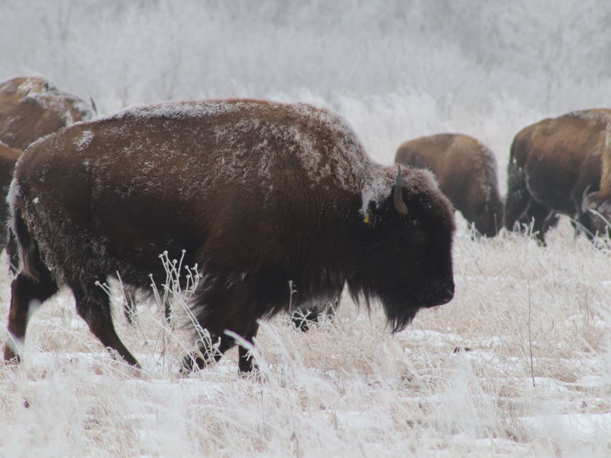 Bison Range Road closes to prevent further damage