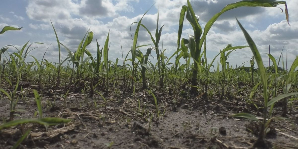 Weather continues to threaten 2019 crops