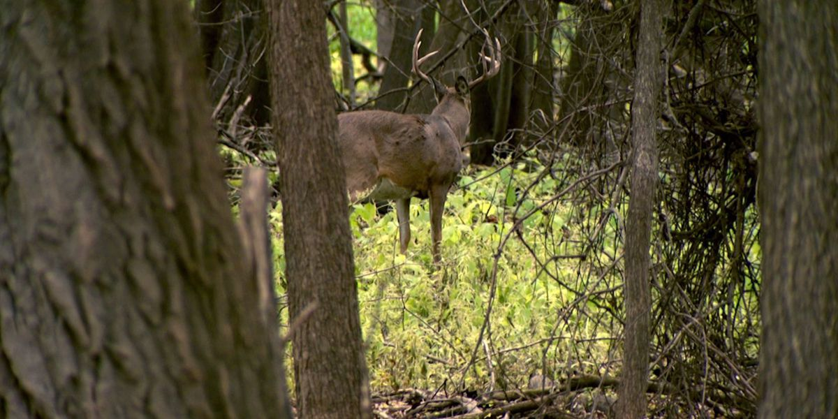 DNR enforces deer movement restrictions to stop spread of CWD