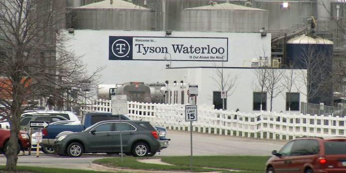 Fired Tyson boss says COVID office pool was a 'morale boost'