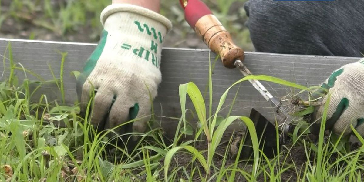 Living Earth Center partners with county to manage Blue Earth County Community Farm