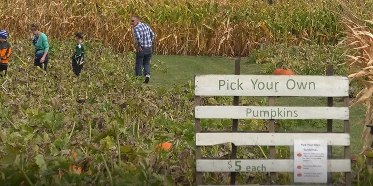 People enjoy Fall fun at pick-your-own pumpkin patch