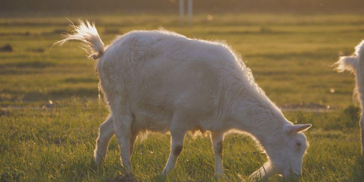 Council passes prescribed grazing ordinance