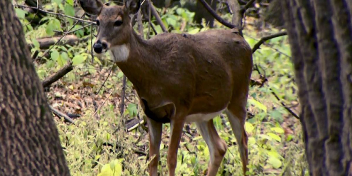 Midwest wildlife officials discuss chronic wasting disease
