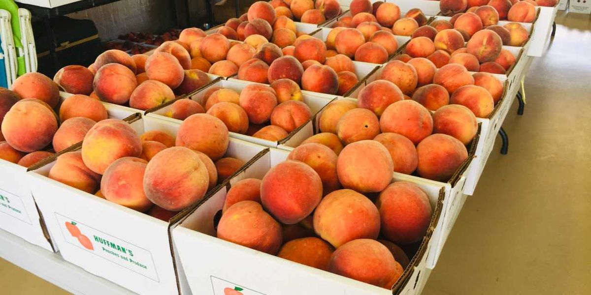 Mankato, New Ulm Hy-Vee locations giving away over 17,000 free peaches on Thursday