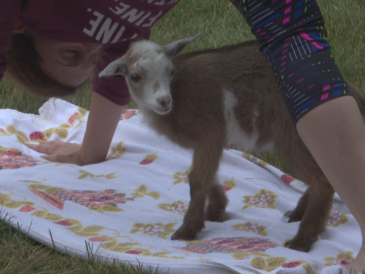 Yoga and goats go hand in hoof at Farmamerica