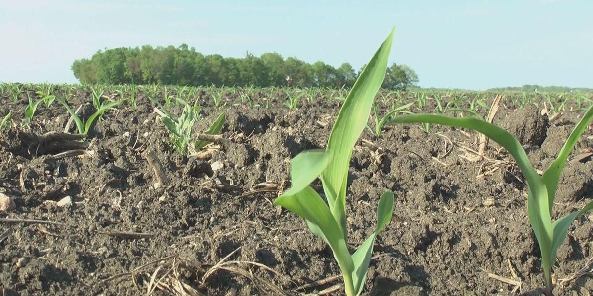USDA: corn, soybean crops emerging across southern Minnesota
