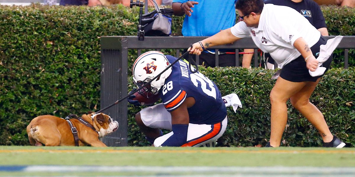 PETA asks Mississippi State to retire live mascot after collision with Auburn player