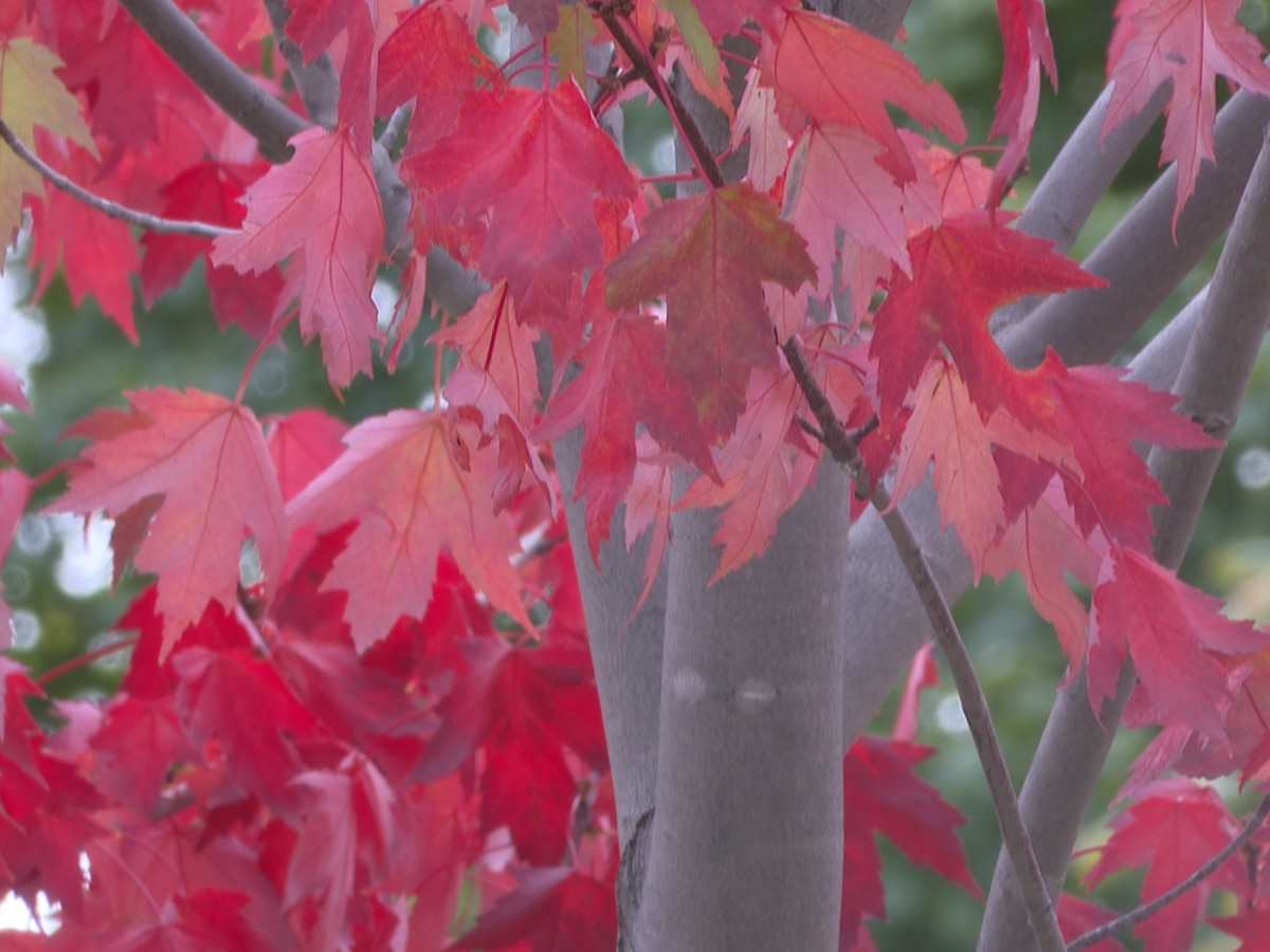 Explore Minnesota releases its 2020 fall color forecast