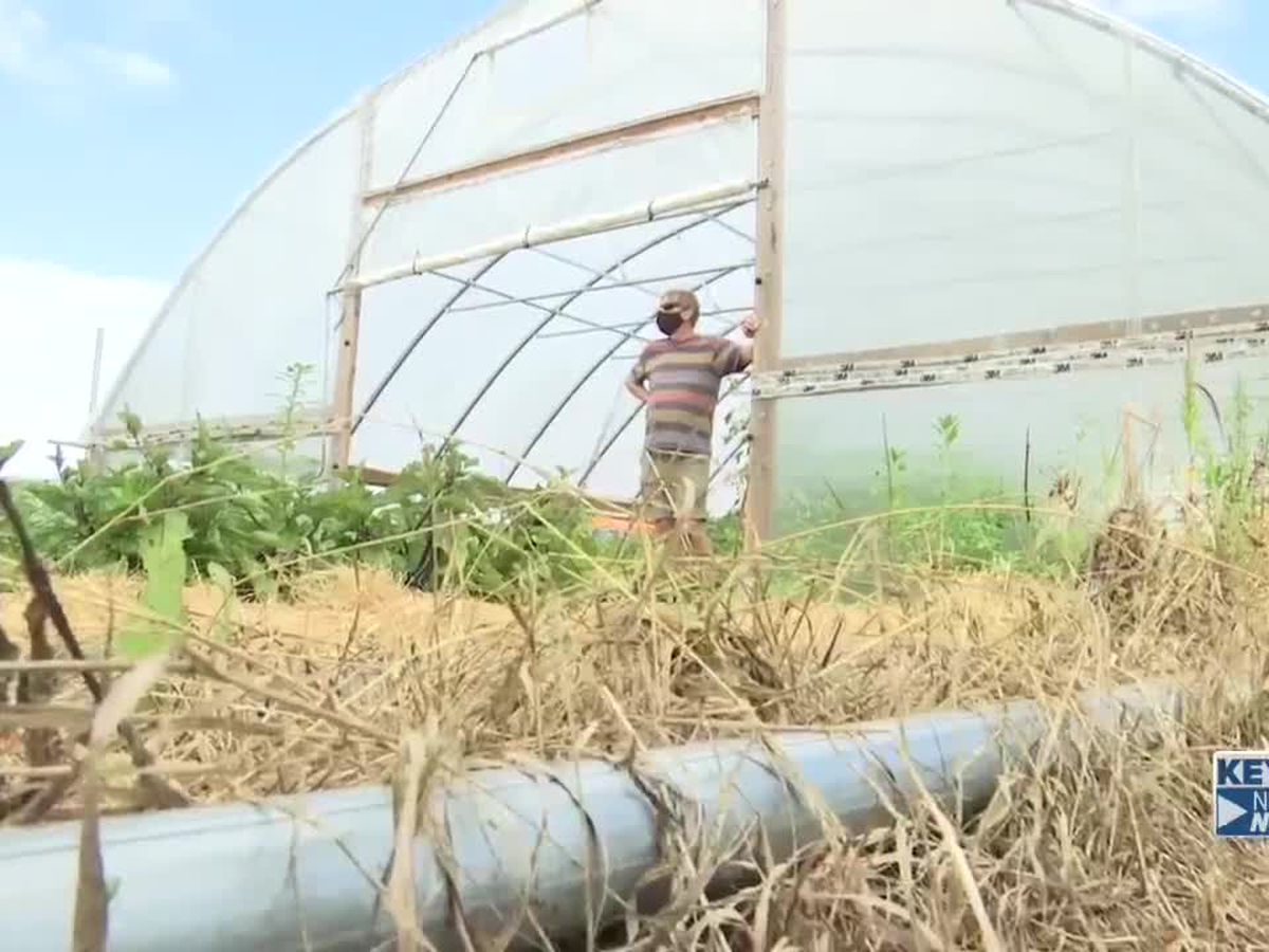 Ag students feed community with help of greenhouse