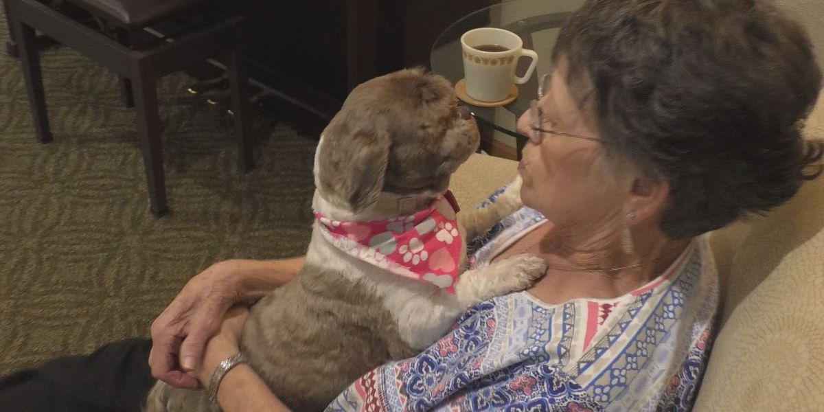 Many positives stem from owning pets as a senior citizen