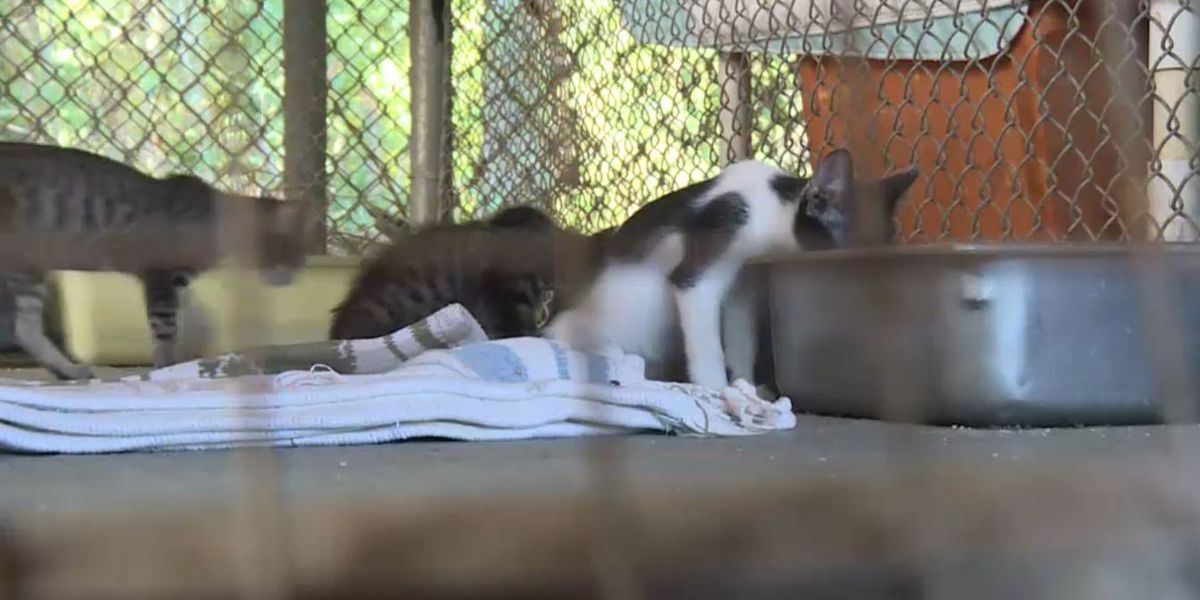 29 cats mauled by pit bulls at Ala  animal shelter
