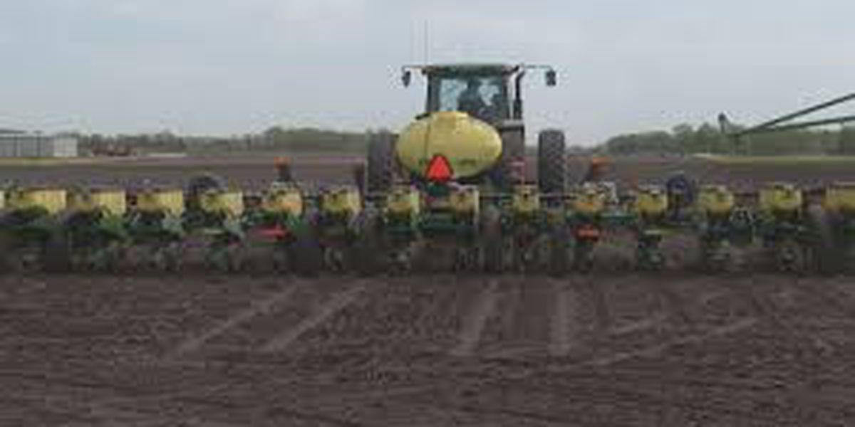 USDA: cooler temperatures hindering crop growth in Minnesota