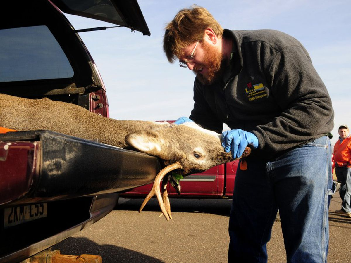 University developing faster test for fatal deer disease