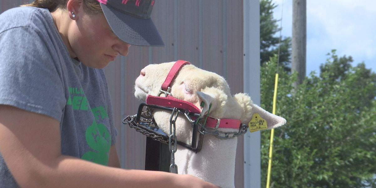 Easton 4-H and FFA member headed to the State Fair