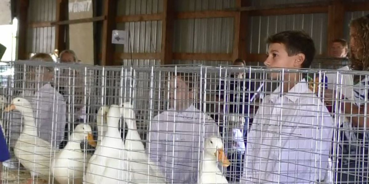FFA, 4-H Poultry Show at the Brown County Fair